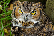 What Big Eyes You Have Print by Robert Carney