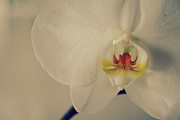 Orchid Flowers Prints - What Love Felt Like Print by Laurie Search