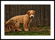 Puppy Photo Originals - What Now? by John J Carpenter