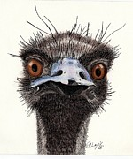 Emu Originals - What?? by Pamela Clark-Cashin