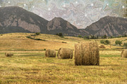 Harvesting Metal Prints - What The Hay Metal Print by Juli Scalzi