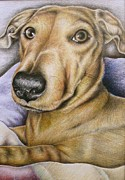 Dogs Drawings - What U Lookin At by Helen Bennett