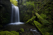 Moss Prints - Whatcom Falls Serenity Print by Mike Reid