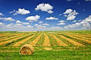 Wheat Farm Field And Hay Bales At Harvest In Saskatchewan Print by Elena Elisseeva