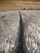 Basket Photos - Wheat Field by Jane Linders
