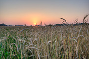 Ver Sprill Photo Originals - Wheat Field Sunrise by Michael Ver Sprill