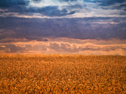 Agriculture Digital Art Metal Prints - Wheat Field Metal Print by Wim Lanclus
