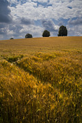 Debra and Dave Vanderlaan - Wheat Fields