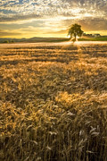 Sunset Scenes. Prints - Wheat Fields of Switzerland Print by Debra and Dave Vanderlaan
