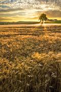 Debra and Dave Vanderlaan - Wheat Fields of Switzerland