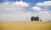 Tim Hester - Wheat fields