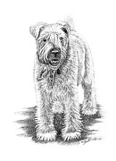 Dog Drawings Framed Prints - Wheaten Charm Framed Print by Renee Forth Fukumoto