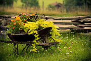 Wheel Metal Prints - Wheel Barrow Of Flowers Metal Print by Shane Holsclaw