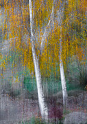 Nature Park Prints - When it rains in autumn Print by Constance Fein Harding