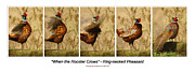 Pheasants Framed Prints - When the Rooster Crows Framed Print by Bruce Morrison