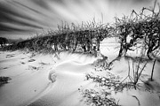 Drifting Snow Metal Prints - When the wind blows Metal Print by John Farnan