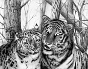 Chinese Tiger Prints - When Two Hearts Collide Print by Peter Piatt