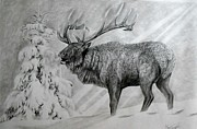 Elk Drawings - When Winter Comes Early by Maria Friedrich