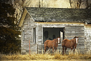 Two Horses Posters - Where Are the People Poster by Betty LaRue