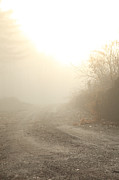 Country Dirt Roads Photo Metal Prints - Where Does The Road Lead Metal Print by Karol  Livote
