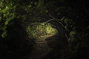 Where Fairies Dwell Print by Sue Fulton