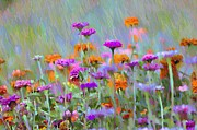 Where Have All The Flowers Gone Print by Bill Cannon