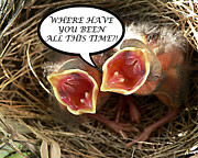 Baby Cardinals Posters - WHERE HAVE YOU BEEN Greeting Card Poster by Al Powell Photography USA