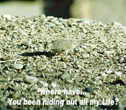 In My Life Photos - Where Have You Been Hiding by Belinda Lee