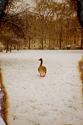 Goose Prints - Where is everyone Print by Jasna Buncic