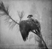 Photomanipulation Prints - Where the Eagle Flys  Print by Reflective Moments  Photography and Digital Art Images