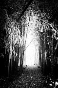 Bamboo Forest Framed Prints - Where the Light Leads Framed Print by John Rizzuto