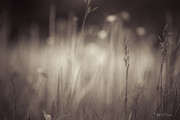Narrow Focus Framed Prints - Where the Long Grass Blows Framed Print by Dustin Abbott