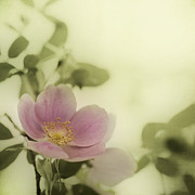 Texture Photos - Where The Wild Roses Grow by Priska Wettstein