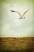 Flying Seagull Prints - Where to Go? Print by Trish Mistric