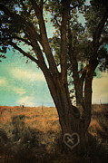 Oak Trees Prints - Where Well Meet Print by Laurie Search