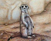 Meerkat Drawings - Whered everybody go ? by Jo Prevost