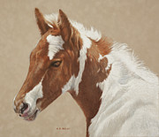 Foal Looking For Her Mother Drawing Posters - Wheres Mom Poster by Helen Bailey