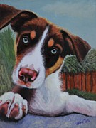 Brown White Dog Framed Prints - Wheres My Bone? Framed Print by Shirl Theis