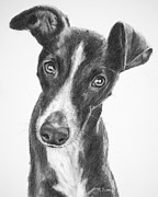 Skinny Drawings Prints - Whippet Black and White Print by Kate Sumners