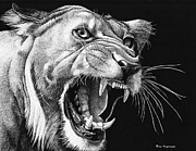 Lioness Drawings Posters - Whiskers and Teeth Poster by Ron Monroe