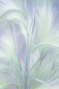 Jenny Rainbow - Whisper in the Moon Light. Grass Pastels