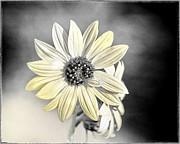 Arne Hansen - Whispered Yellow
