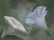Moon Flower Prints - Whispers of Angel Trumpet Datura Print by Angie Vogel