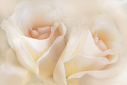 Orange Roses Prints - Whispers of Peaches and Cream Roses Print by Jennie Marie Schell