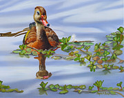Waterfowl Paintings - Whistling Dixie by Phyllis Beiser