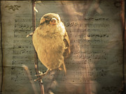 Whistling Song Sparrow Print by Janice Rae Pariza