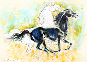 Mustang Pastels Metal Prints - White and black mustang galloping Metal Print by Kurt Tessmann
