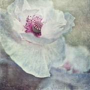 Close Up Floral Framed Prints - White And Pink Framed Print by Priska Wettstein