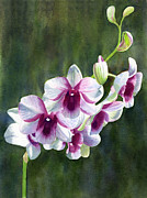 White Flowers Paintings - White and Red Violet Orchid by Sharon Freeman