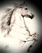 Horse Drawings Prints - White Andalusian in Vinette Print by Cheryl Poland